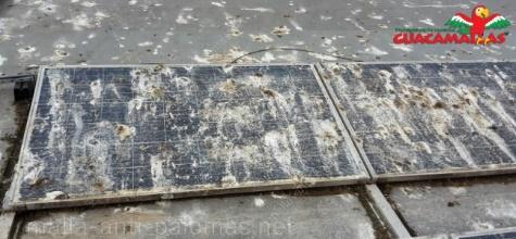 Paneles solares cubiertos por excrementos de palomas y aves problemáticas